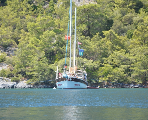 Bluecruise,Cheersyachting
